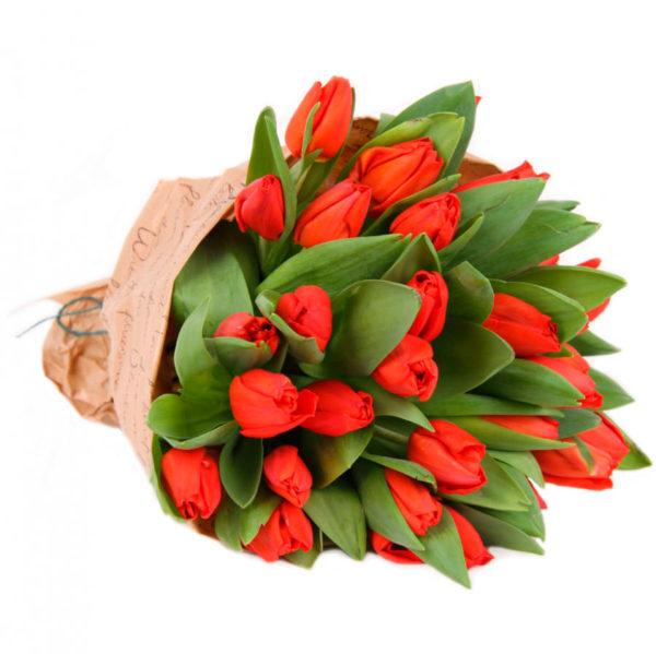 Букет тюльпанов красных 25 шт
