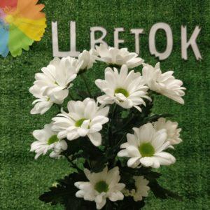 Хризантема мелкоцвет белая