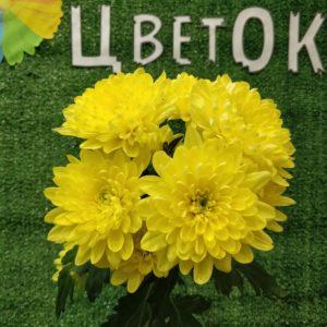 Хризантема мелкоцвет желтая