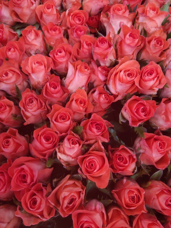 Местная роза оранжевая
