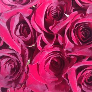 Местная роза красная